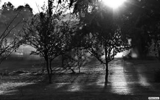 Rive Droite, parc Marmoutier