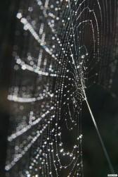 web-toilearaignee_2