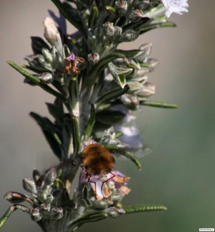 Peluche volante butinant du nectar ... de dos